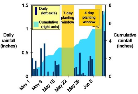 Rainfall at KSU Research Farm between May 1 and June 11, 2009. Dark bars show daily rainfall (left axis); light area shows cumulative rainfall (right axis). Suitable planting windows shown in gold.
