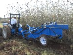 Sweetpotato harvester, October 21, 2009