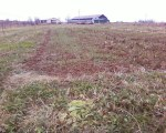 Winter cover crop, November 19, 2009
