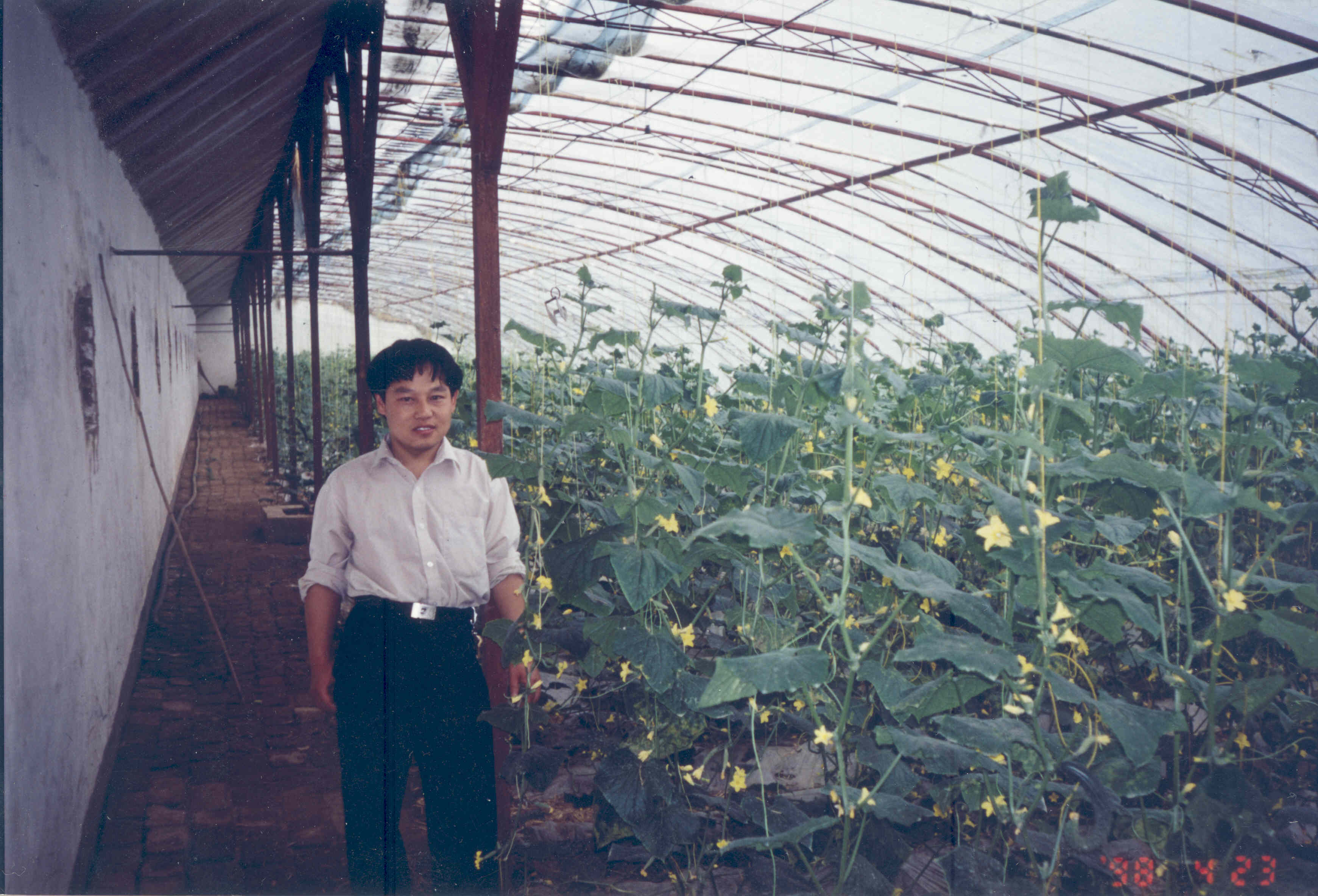 Solar greenhouses, Chinese-style | Energy Farms on