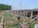 Old solar greenhouse